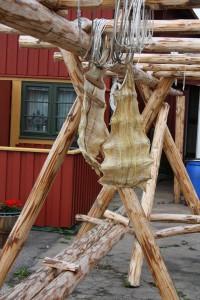 Lutfisk i Mollösund Foto: Caroline Maino