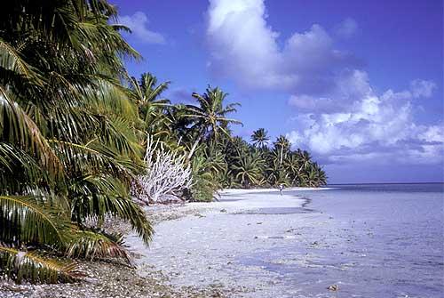 Lagun och kokospalmer South Caroline atoll. Foto: Angela K. Kepler