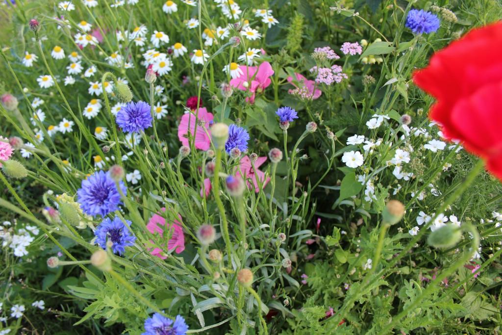 Blomsteräng Foto: Lena Ahlström