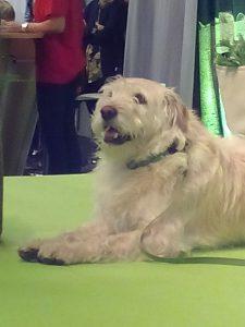 Hunden Arthur Foto: Florence Wetzel