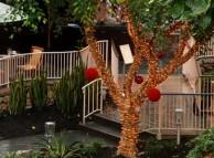 Träd dekorerat för Bodhidagen