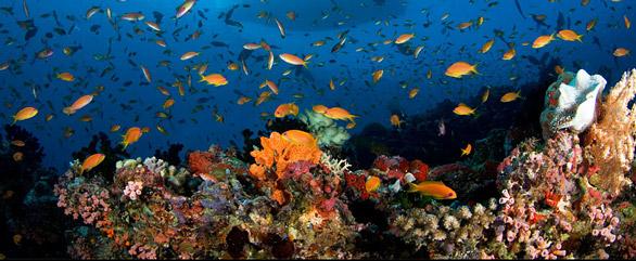 Korallrev vid Maldiverna Foto: Lånat från Mitt Indien