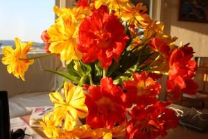 Tulpanens kronblad är ätbara. Foto: Caroline Maino